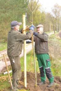 Ernst Henning Michaelis und Eberhard von Seydlitz temparamentvoll beim Baumpflanzen.